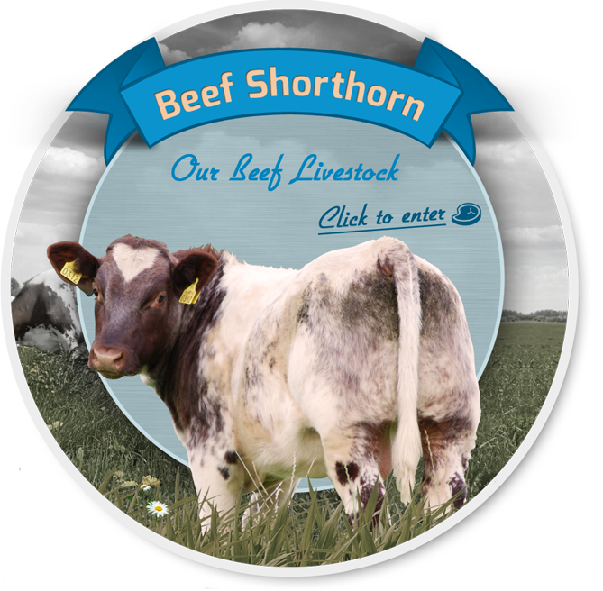 Beef Shorthorn Society