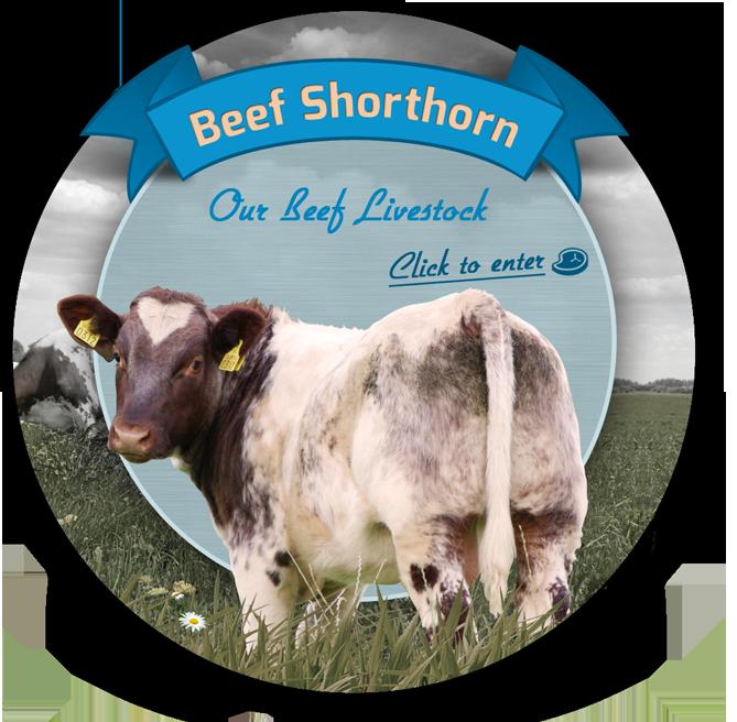 Beef Shorthorn Society