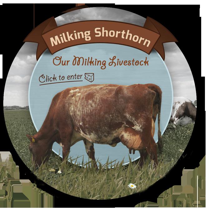 Milking Shorthorn Society