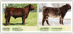Links to Al Irish Shorthorn Society