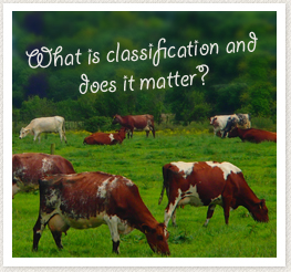 Classification Irish Shorthorn Society