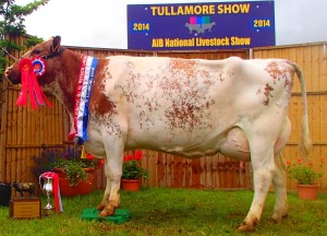 Ransboro Waterloo Rose 28th Milking Shorthorn Champion 2014