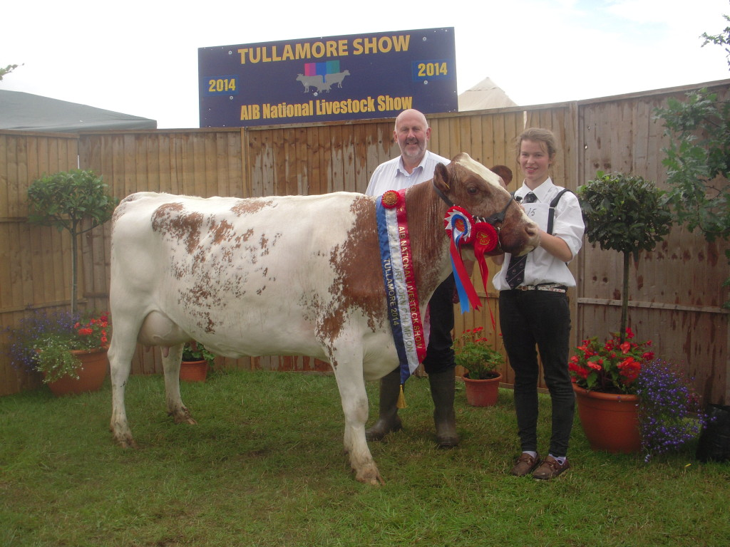 Milking Shorthorn Champion 2014 Ransboro Waterloo Rose 28th with Louise Carter and Judge Donal McKeon