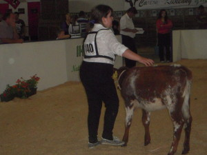 Ella O'Donoghue making her debut in the Showring at the National Calf Show in Cillin Hill