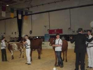 line up of 2013 heifer class